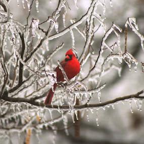 by Crystal  Wilson - Animals Birds (  )