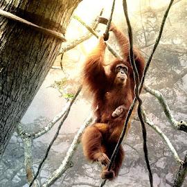 Into the Jungle by Bjørn Borge-Lunde - Digital Art Animals ( wild animal, animals, wilderness, nature, big apes, monkeys, ape, orangutan )