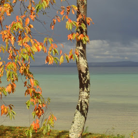 Autumn at Point Nipigon by MarySue Price - Landscapes Waterscapes ( trees blue water, birch tree, lake huron, lake, storm clouds, great lakes, leaves, mackinac island, straits of mackinac, lake michigan, mackinaw, autumn, fall, point nipigon )