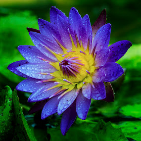 Waterlily by 3rd eye Monster - Nature Up Close Flowers - 2011-2013