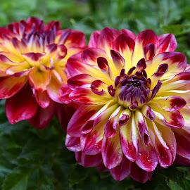 by Heather Aplin - Flowers Flower Gardens