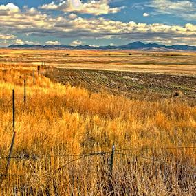 Mayhem Trails by Shane Vandenberg - Landscapes Prairies, Meadows & Fields