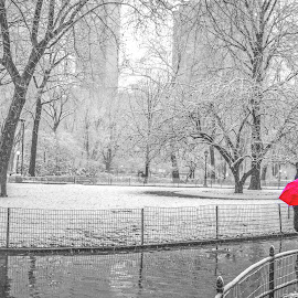madison sq park new york by Roman Gomez - Landscapes Weather ( romansgallery, nyc, madison sq park )