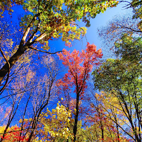Looking Up by Vonelle Swanson - Nature Up Close Trees & Bushes ( foliage, fall, trees, leaves, new jersey, berries )