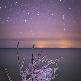 Frozen in Time by Andy Taber - Nature Up Close Trees & Bushes