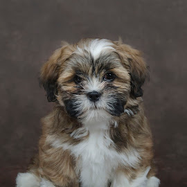 Carmen by Anja Voorn - Animals - Dogs Puppies