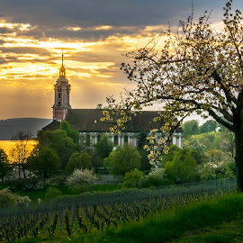 Monastery lake constance  by Linda Brueckmann - Buildings & Architecture Public & Historical