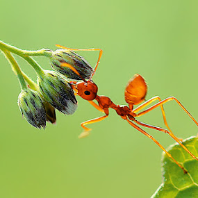 by Handri Fitrido - Animals Insects & Spiders