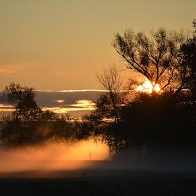 Through the autumn mist by Thomas Fitzrandolph - Landscapes Sunsets & Sunrises ( nature, autumn, fall, niagara county ny, trees, nikon d5200, sun light, sunrise, lockport ny )