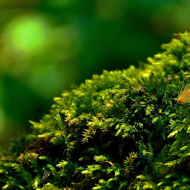 deep green by Ioana Draghiciu - Nature Up Close Other plants ( green, moss, snag, close up )