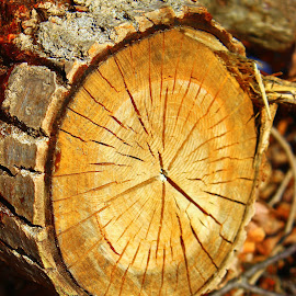 Wood detail by Jenn Moss - Nature Up Close Trees & Bushes ( detail, wood, tree, grain, forest, log )
