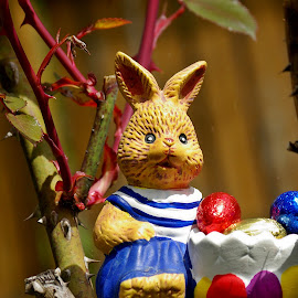 Master Bunny by Ciprian Apetrei - Public Holidays Easter ( ploiesti, easter, colorful, decorations, garden )