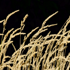 by Dennis Robertson - Nature Up Close Leaves & Grasses