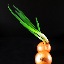 Sprouting Onion by Jane Spencer - Food & Drink Fruits & Vegetables ( spouting, bulbs, vegetable, green onion, onion )