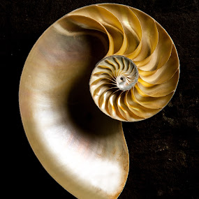 From the Deep 2 by Russell Mander - Abstract Macro ( shell, deep water, pattern, compartments, colours )