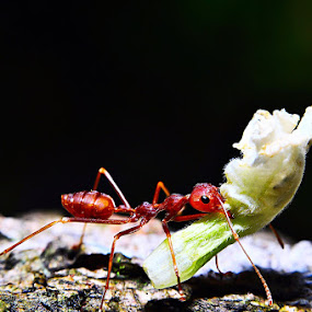 My Food by Luthfi Hidayat - Animals Insects & Spiders