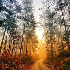 Good morning Sun by Andreja Svenšek - Landscapes Forests ( tress, tree, fog, morning glory, forest, roadside, road, sunrise, morning, lonely, mist )