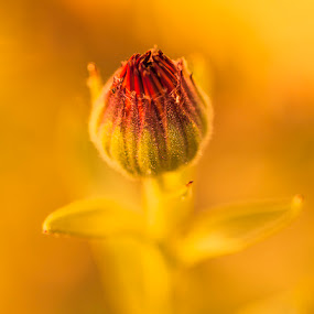 by Brandon Downing - Nature Up Close Flowers - 2011-2013 ( macro )