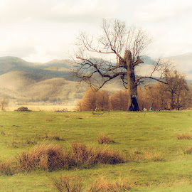 after winter by Costin Mugurel - Nature Up Close Trees & Bushes ( mountain, tree, nature, landscape, spring )