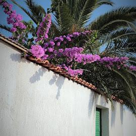 by Siniša Almaši - City,  Street & Park  Street Scenes ( nature, colors, summer, door, flowers, wall, city )