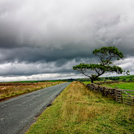 The road ahead by Steven Stamford - Landscapes Travel ( north yorkshire, yorkshire moors, lealholm, lonely tree, moorland, tree, moorland road, scenic, country road, landscape, sheep,  )