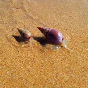 Snail with small snail by Carl Kranhold - Instagram & Mobile Android ( sand, sea, ocean, beach, snail )
