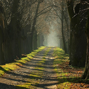 Wallenstein alley  by Irena Brozova - Landscapes Forests ( czech republic )