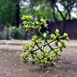 by Areej Khalid - Nature Up Close Other plants ( plant, fallen, green, blur, garden )