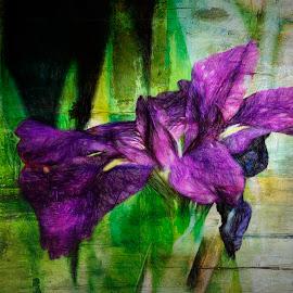 Water Iris by Zsuzsanna Szugyi - Digital Art Things