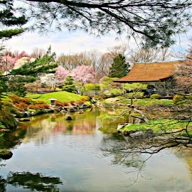 The Pagoda and the pond by Valerie Stein - Landscapes Waterscapes ( japanese, landscape, cherry blossoms. valerie stein, waterscape. spring, relax, tranquil, relaxing, tranquility )