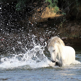 Hydro Horse Power by Gary Odell - Animals Horses ( water, nature, power, beauty, wild horses )