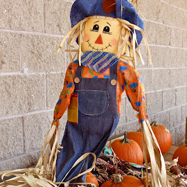 The scarecrow and the pumpkins. by Peter DiMarco - Public Holidays Halloween ( holiday, scarecrow, pumpkins, holidays, halloween )
