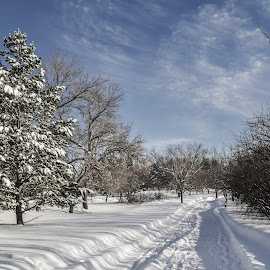 Winter by Garces & Garces - City,  Street & Park  City Parks ( winter, cold, canada, freeze, saskatchewan, snow, frozen, prairie, regina )
