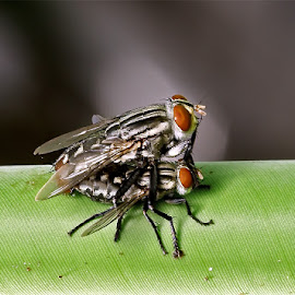 Natural by Ellmok Mokh - Abstract Macro ( insects, flies )