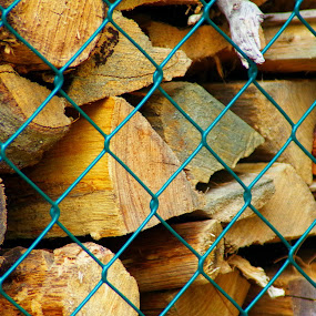wood behind fence by Martin Stepalavich - Artistic Objects Other Objects