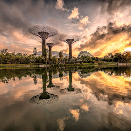 Sunrise @ Garden by The Bay by Gordon Koh - City,  Street & Park  City Parks ( clouds, reflection, garden by the bay, supertrees, riverfront, super trees, asia, trees, dramatic sunrise, symmetry, travel, homes, singapore )