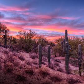 Twilight by Charlie Alolkoy - Landscapes Deserts ( desert, sunset, arizona, tucson, sunrise, cactus )