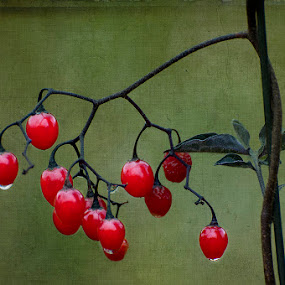 wild berries by Evelyn Young - Nature Up Close Flowers - 2011-2013