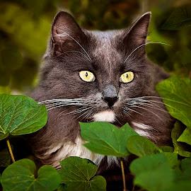 Bright Eyes by Sabrina Causey - Animals - Cats Portraits ( cat, cat eyes, green, fur, grey, mammal, animal, eyes )