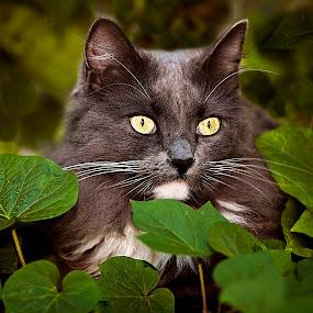 Bright Eyes by Sabrina Causey - Animals - Cats Portraits ( cat, cat eyes, green, fur, grey, mammal, animal, eyes,  )