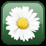 Daisy Flower Live Wallpaper Icon