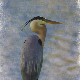 Blue Heron Watercolor by Thomas Pound - Digital Art Animals ( watercolor, wading bird, blue heron, heron, egret )