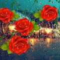 Roses Love Drops for Lollipop - Android 5.0