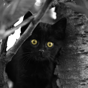 Kitten in the Tree by Robbie Caccaviello - Animals - Cats Portraits ( kitten, cat, tree, yellow, yellow eyes )