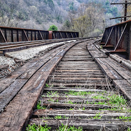 Abandon Rails  by Diane Ljungquist - Transportation Railway Tracks