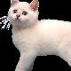 Flappy Kitty Reborn