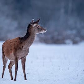 doe... by Stanley P. - Animals Other Mammals