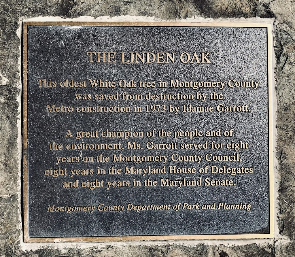 THE LINDEN OAK The oldest White Oak tree in Montgomery County was saved from destruction by the Metro construction in 1973 by Idamae Garrott. A great champion of the people and of the environment, ...