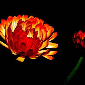 BEAUTIFUL................ by Arunabha Kundu - Nature Up Close Flowers - 2011-2013
