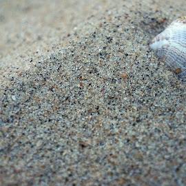 Lonely Seashell by Magdalena Sitko - Nature Up Close Sand ( shore, sand, person, cracks, unique, scrapes, colors, seashell, beauty, beach )